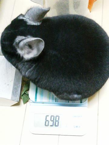 加奈ちゃん、体重測定!