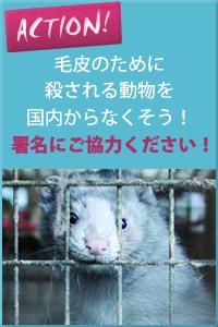 毛皮取得の為の国内の動物飼育施設の閉鎖と禁止を求める署名にご協力ください