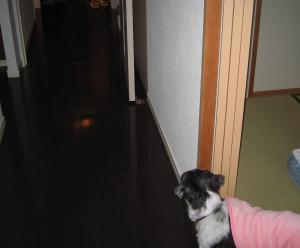 ちびもえ2010.12 076