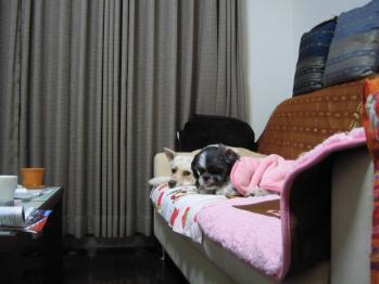 ちびもえ2010.12.23 050
