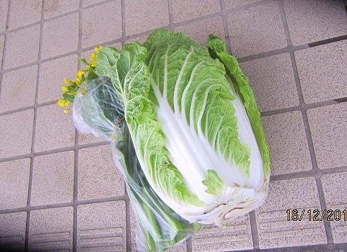 雪を被った野菜
