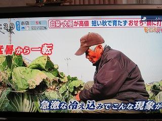 白菜産地の声