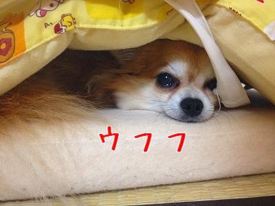 456_20120606211235.jpg