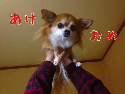 IMG_0968.jpg