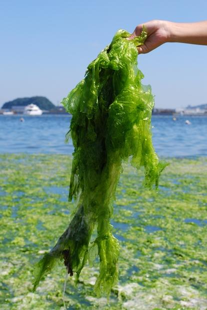 DSC_0659 1616緑魚