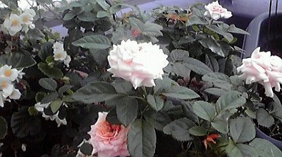 shukusho-P1000284.jpg