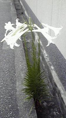 shukusho-P1000290.jpg