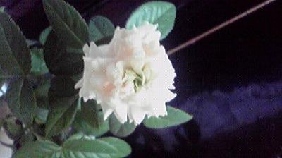 shukusho-P1000323.jpg