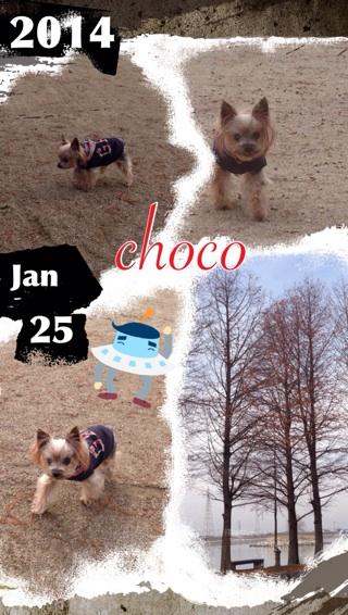choco17