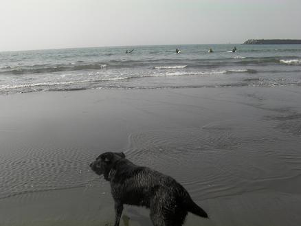 サザンビーチでクロ1