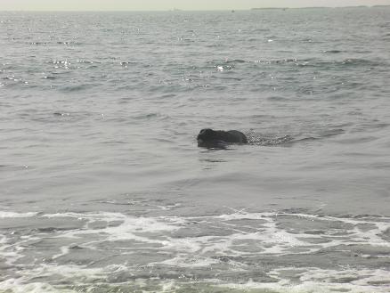 サザンビーチでクロ