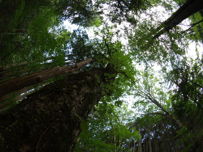 木曽川太古の森