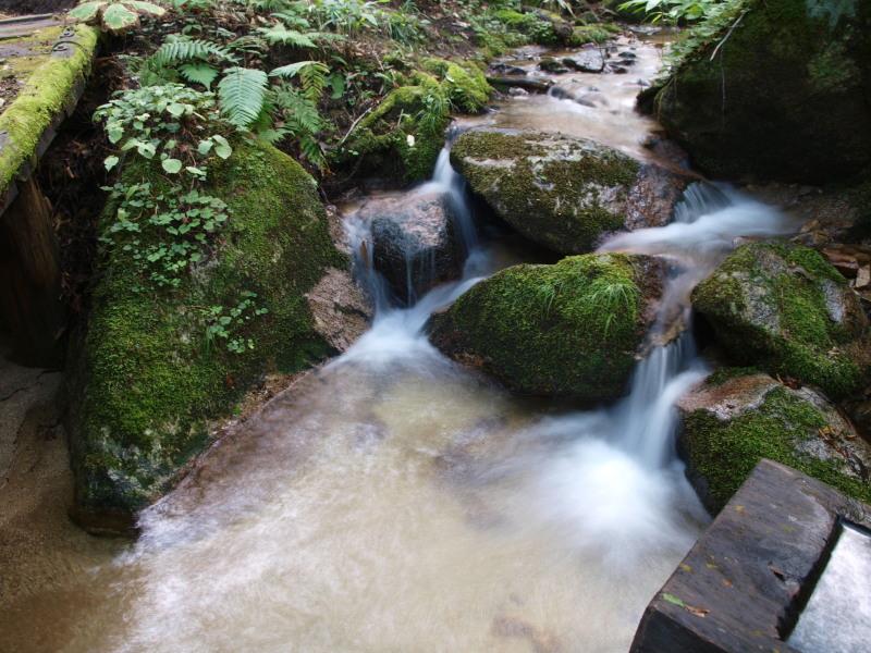 木曽川源流の森