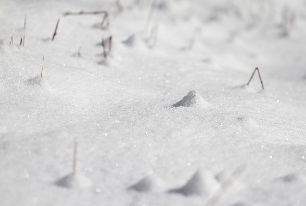 雪原のピラミッド