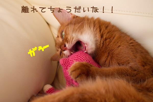 2011_11_16_5.jpg