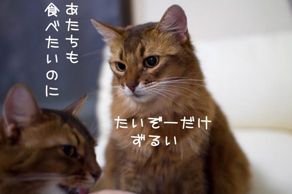 2011_11_22_3.jpg