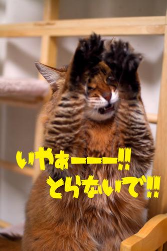 2012_01_07_1.jpg