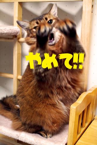 2012_01_07_2.jpg