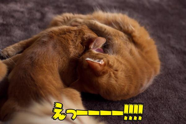 2012_02_08_2.jpg