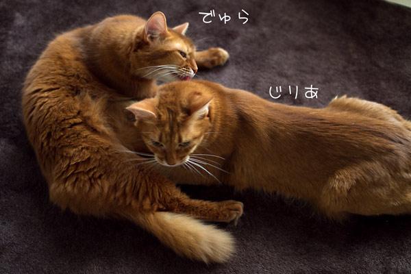 2012_02_08_3.jpg