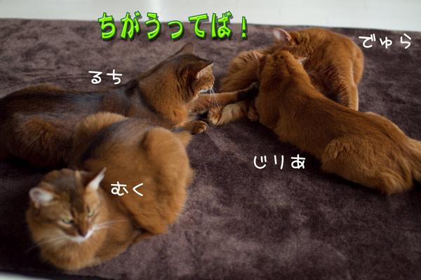 2012_02_08_44.jpg