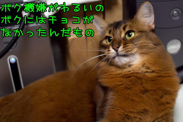 2012_02_16_4.jpg
