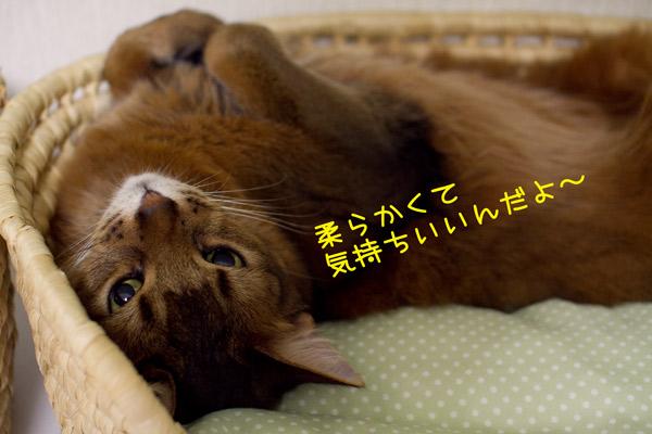 2012_02_25_2.jpg