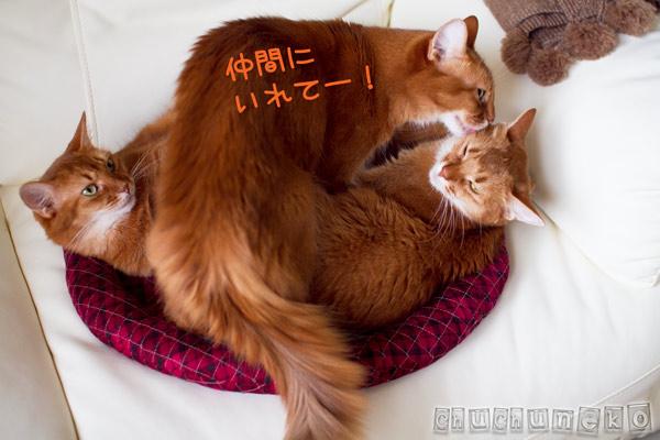 2012_02_26_5.jpg