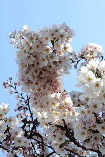 2012_04_10_6.jpg