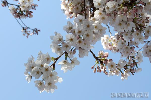 2012_04_10_8.jpg
