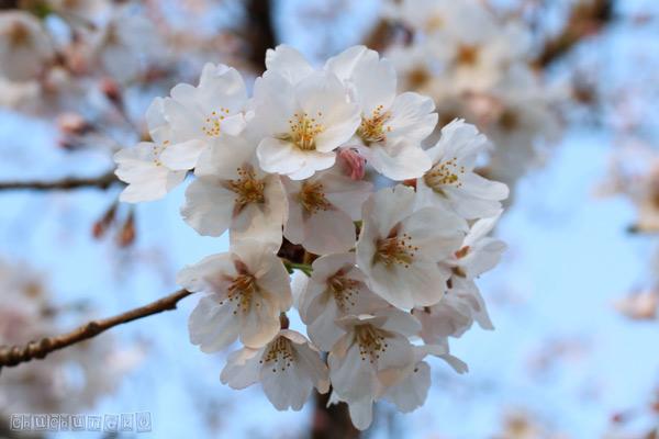 2012_04_12_3.jpg