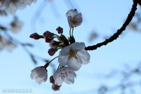 2012_04_12_4.jpg