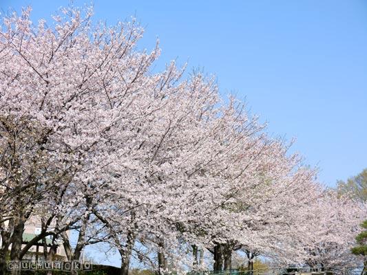 2012_04_13_1.jpg