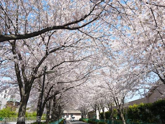 2012_04_13_3.jpg
