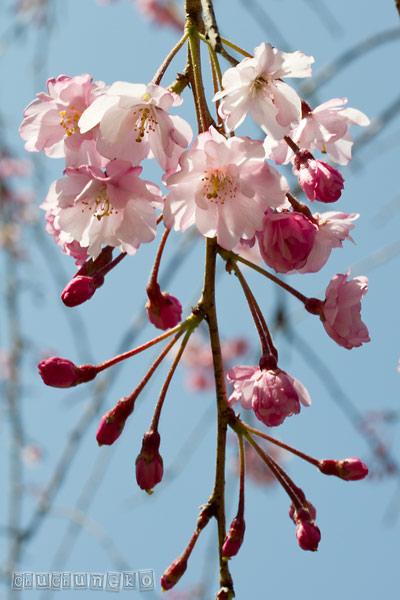 2012_04_13_6.jpg