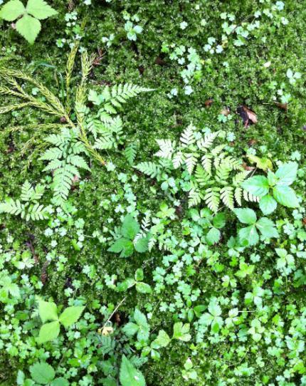 nikko moss