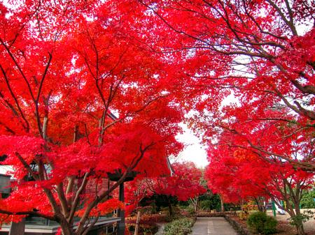 写真 2014-11-28 13 42 09_Fotorth_