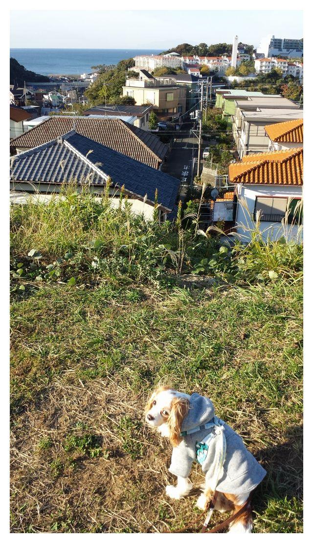 2014-11-042007_46_06a.jpg