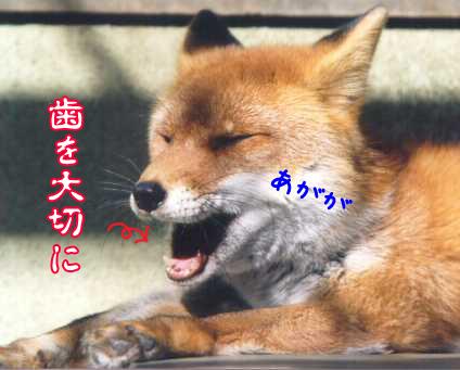 20101125hahaha.jpg