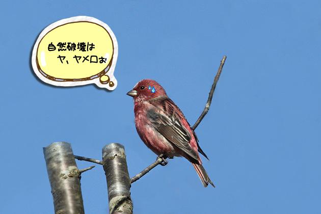 20101205oomashiko06_20101205180203.jpg