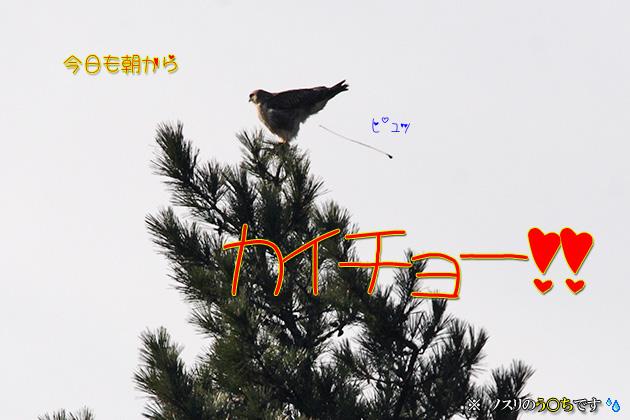 20101206kaicho03_20101205190501.jpg