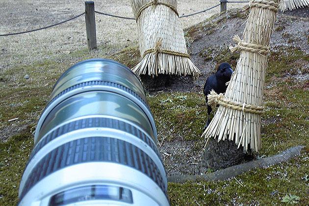 20101217hashibutogarasu04.jpg