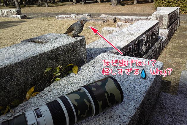 20110104hiyodori02.jpg