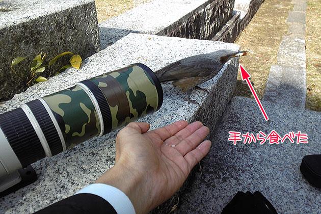 20110104hiyodori04.jpg