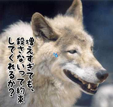 20110117wolf.jpg