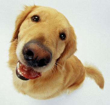 20110216dog.jpg