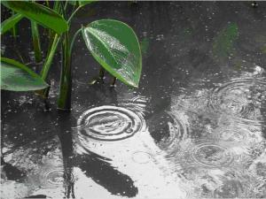 雨 ( ver-1 )