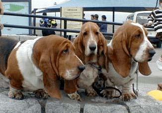 amis_dogs.jpg