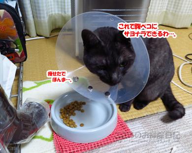 LUSMOribu002-12-2012.jpg