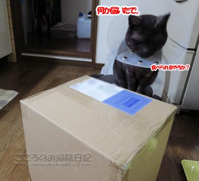 LUSMOribu003-12-2012.jpg